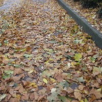 Hazardous leaves on footway
