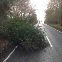 Tree fallen in road