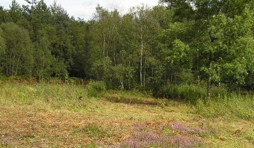 broxbourne-wood-surviving-heathland