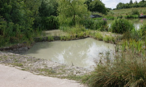 Newly created pond at Southern Country Park, Bishop's Stortford