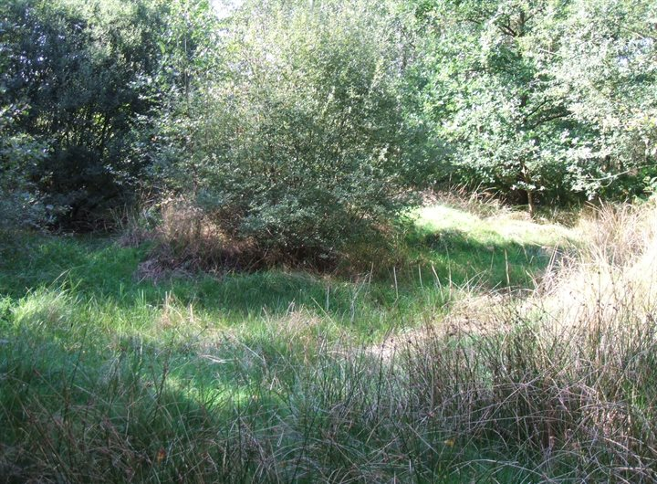 Pond Management Hertfordshire County Council Www