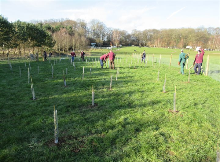 great-ashby-planting-trees-with-tree-guards