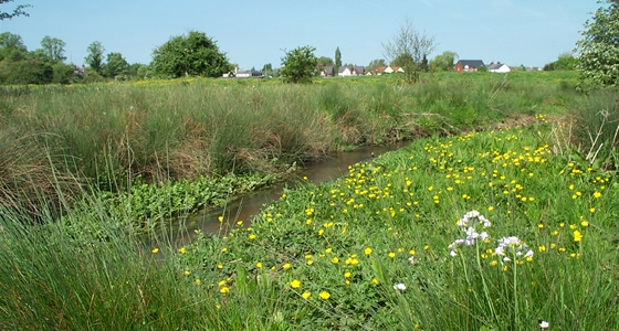 Wildflowers and river Purwell Meadows